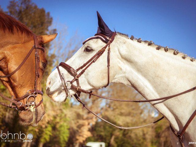 Horse Creations Buliz sur chevaux