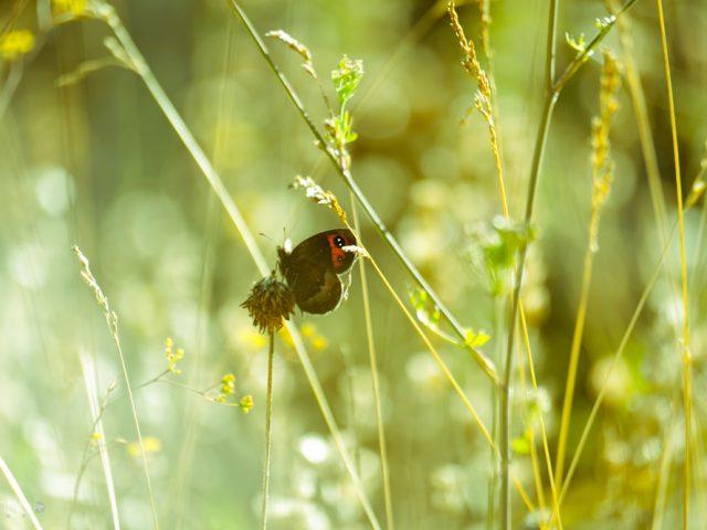 Insectes de Valberg
