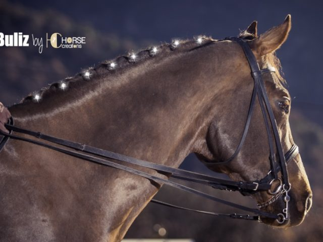 Horse Creations Titano